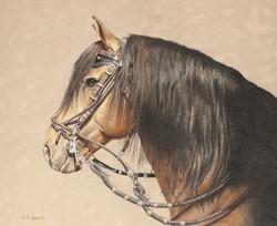 Peruvian Stallion
