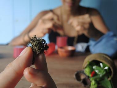 Verde Passageiro na Amazônia