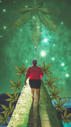 Mãe Cannabis Por Fernanda Farias