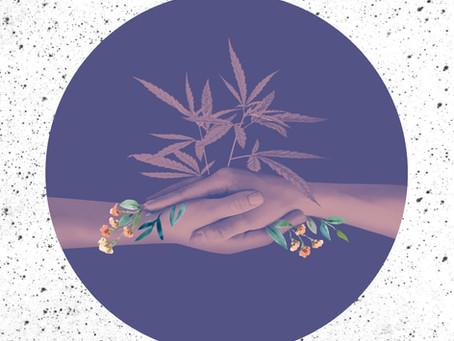 Cannabis: a importância de participar da discussão acerca de sua regulamentação