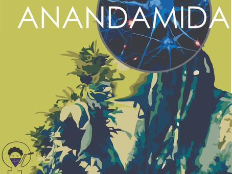 O que a Anandamida tem a ver com o ciclo menstrual?