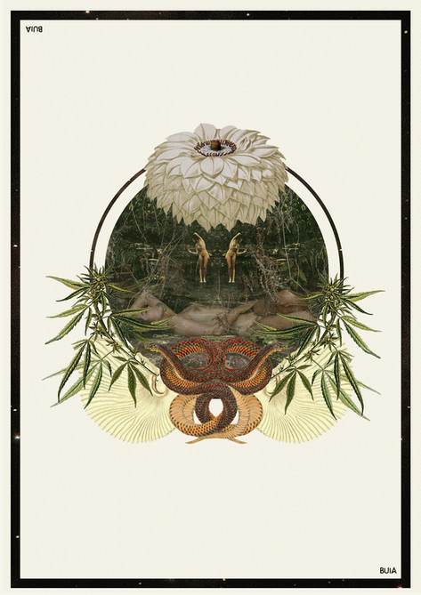 retrato cannabis por @BuiaFronza