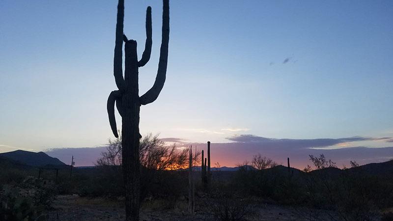 Desert Saige Landscape