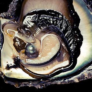 Birth of Tahitian black pearl