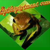 reptile appartment.jpg