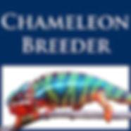 chameleon breeder podcast.jpg