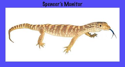 Spenser's Monitor, goanna, lizard, Nature 4 You, monitor, reptile