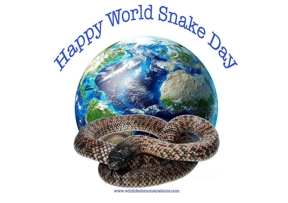 world snake day, snake, reptile, spotted black snake, celebrate snakes, nature for you