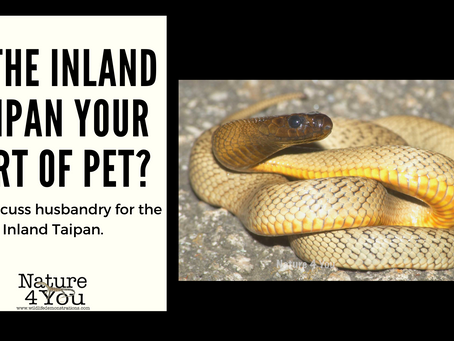 Is the Inland Taipan for you?