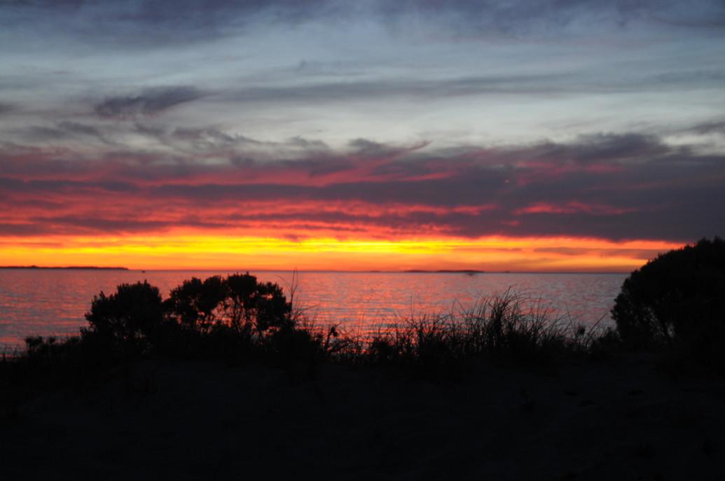 Coastal Heath