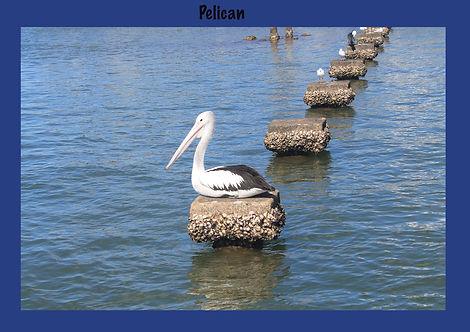 Pelican, Nature 4 You, bird