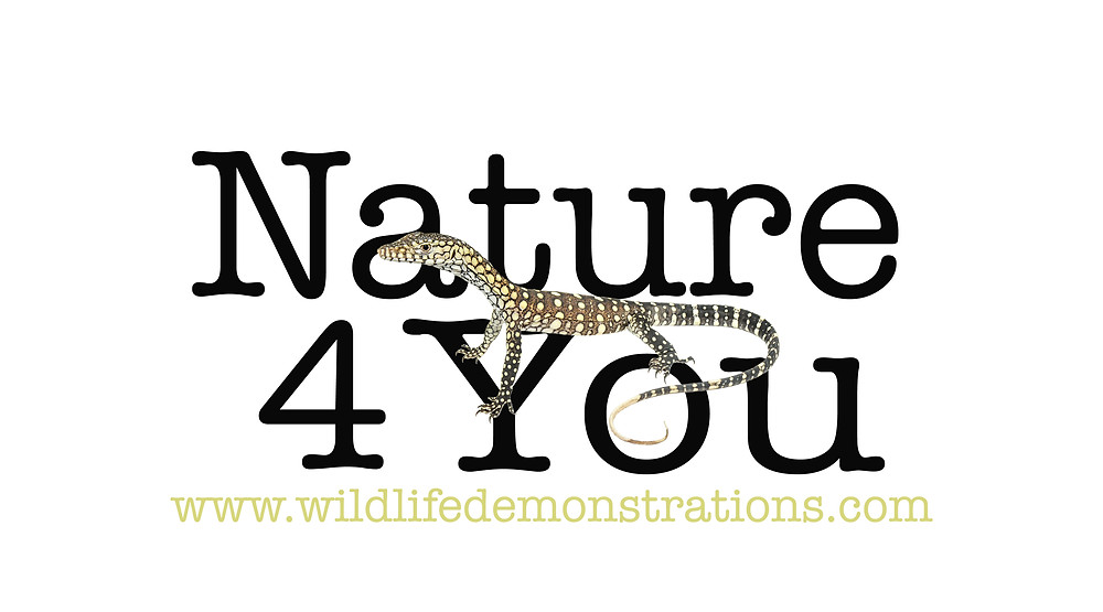 business logo, nature for you new logo, perentie, advertising