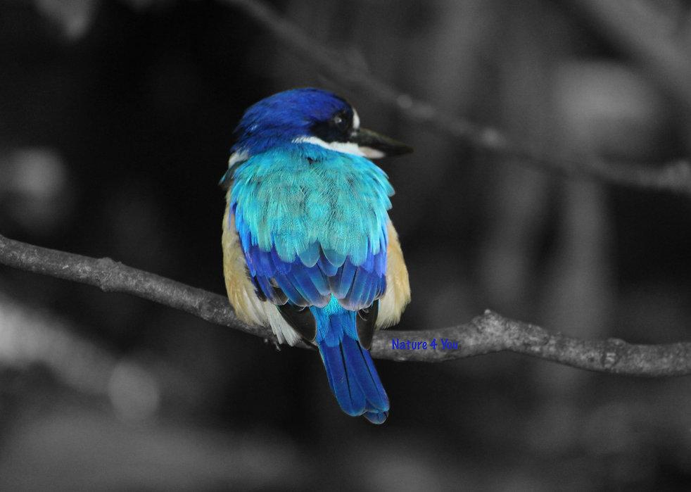 birdbnw.jpg