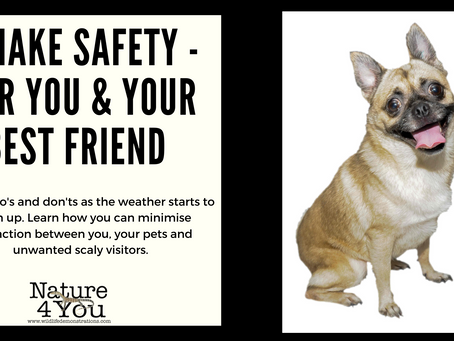 Snake safety in Australia. How to protect dogs and kids from snakes