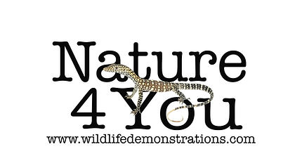 Nature 4 You logo, Sea snake, damage mitigation permit training, venom, Australian flora & fauna, Australian photographer, venomous snake, Scott Eipper, Tyese Eipper, Tie Eipper, Australian author, Nature 4 You, wildlife demonstrator, reptile shows, herpetology, frogs of Australia, snakes of Australia, A guide to Australian snakes in captivity elapids & colubrids, dangerous creatures of Australia, lizards of Australia, snake book, lizard book, frog book, field guide, snake catcher, snake, python, elapid, colubrid, blindsnake, turtle, goanna, monitor lizard, skink, pygopod, legless lizard, gecko, dragon, lizard, herpetologist, snake training, reptile cards, conservation, reptile, amphibian, frog, reptile stickers, reptile breeder Queensland, crocodile, reptile birthday party, reptile book, reptile tote bags, reptile fridge magnet, snake shows, frog fridge magnet, wildlife photography, reptile signs, reptile gift tags, reptile posters,  hots, wildlife carer