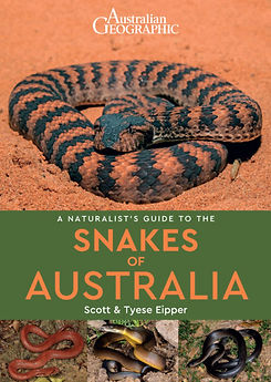 Sea snake, damage mitigation permit training, venom, Australian flora & fauna, Australian photographer, venomous snake, Scott Eipper, Tyese Eipper, Tie Eipper, Australian author, Nature 4 You, wildlife demonstrator, reptile shows, herpetology, frogs of Australia, snakes of Australia, A guide to Australian snakes in captivity elapids & colubrids, dangerous creatures of Australia, lizards of Australia, snake book, lizard book, frog book, field guide, snake catcher, snake, python, elapid, colubrid, blindsnake, turtle, goanna, monitor lizard, skink, pygopod, legless lizard, gecko, dragon, lizard, herpetologist, snake training, reptile cards, conservation, reptile, amphibian, frog, reptile stickers, reptile breeder Queensland, crocodile, reptile birthday party, reptile book, reptile tote bags, reptile fridge magnet, snake shows, frog fridge magnet, wildlife photography, reptile signs, reptile gift tags, reptile posters,  hots, wildlife carer