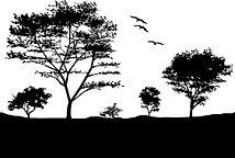 silhoutte of nature, Sea snake, damage mitigation permit training, venom, Australian flora & fauna, Australian photographer, venomous snake, Scott Eipper, Tyese Eipper, Tie Eipper, Australian author, Nature 4 You, wildlife demonstrator, reptile shows, herpetology, frogs of Australia, snakes of Australia, A guide to Australian snakes in captivity elapids & colubrids, dangerous creatures of Australia, lizards of Australia, snake book, lizard book, frog book, field guide, snake catcher, snake, python, elapid, colubrid, blindsnake, turtle, goanna, monitor lizard, skink, pygopod, legless lizard, gecko, dragon, lizard, herpetologist, snake training, reptile cards, conservation, reptile, amphibian, frog, reptile stickers, reptile breeder Queensland, crocodile, reptile birthday party, reptile book, reptile tote bags, reptile fridge magnet, snake shows, frog fridge magnet, wildlife photography, reptile signs, reptile gift tags, reptile posters,  hots, wildlife carer