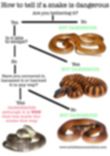 Flow chart on a dangerous snake by Nature 4 You