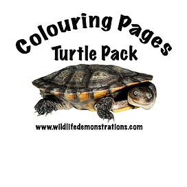 Turtle, Cann's Long-necked Turtle, Nature 4 You, reptile