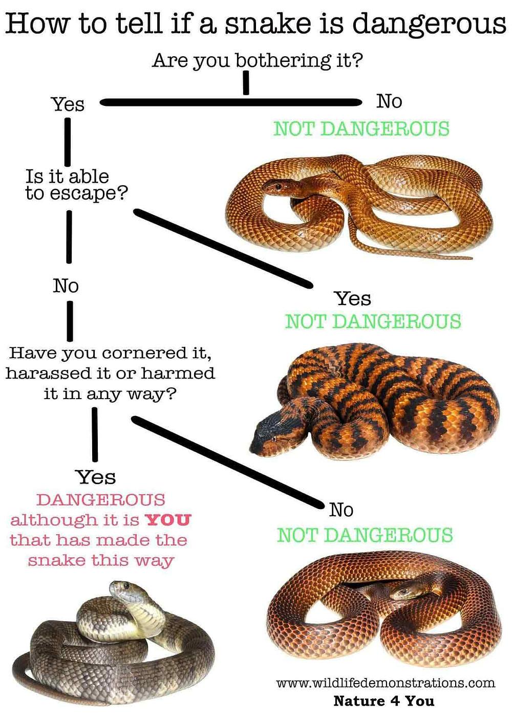 snake bite flow chart