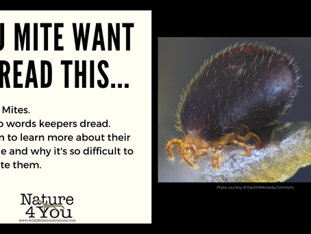 Snake Mites - the life cycle of those tiny, ugly little pests we love to hate.