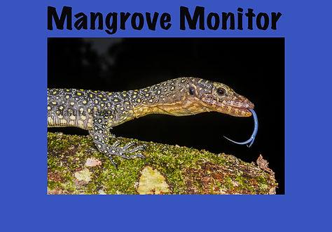 Mangrove Monitor, Nature 4 You, lizard, goanna, reptile