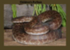 Children's python, Nature 4 You, python, snake, reptile