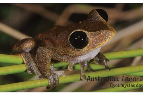 Frog Fridge Magnets
