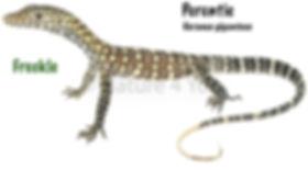 Perentie, Varanus giganteus, lizard, Australian goanna, reptile, cold blooded pet, herp, Nature For You
