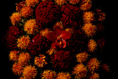 flower_260.jpg