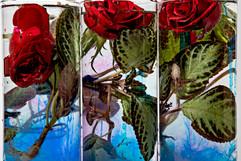 flower_254.jpg