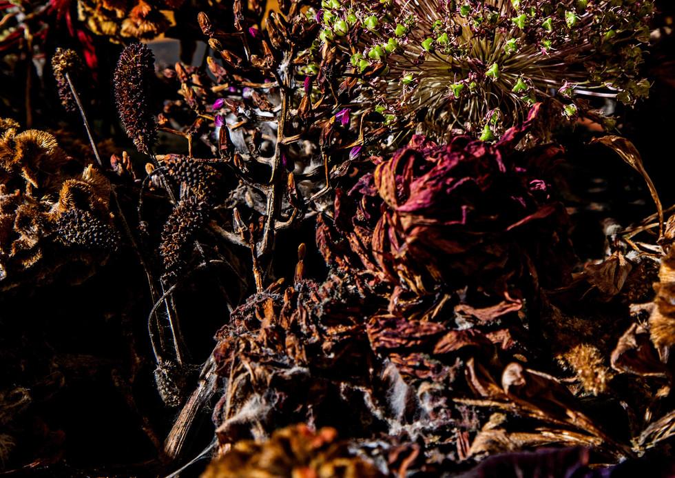 flower_221.jpg