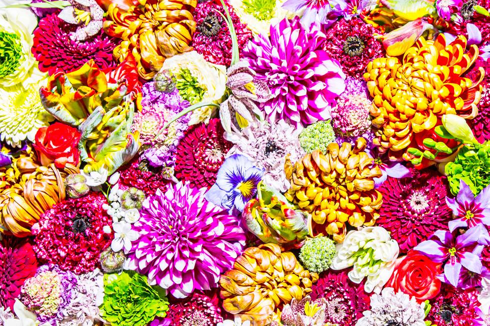 flower_136.jpg