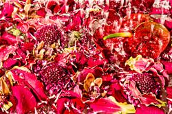 flower_078