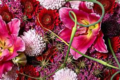 flower_250.jpg