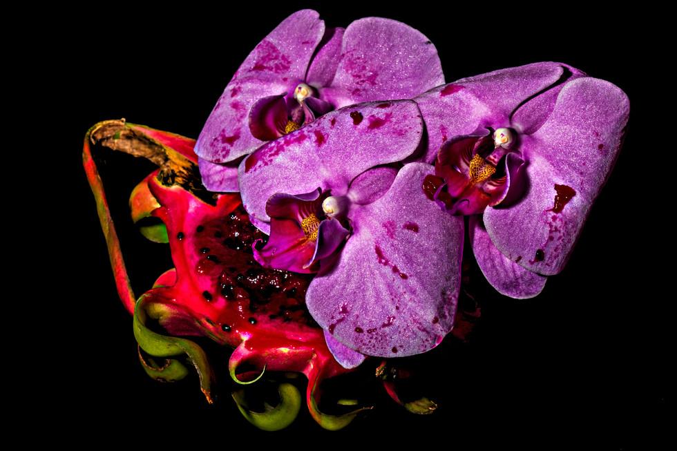 flower_113.jpg