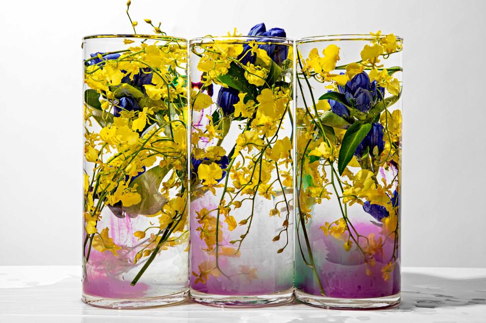 flower_255.jpg