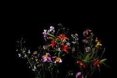 flower_246.jpg