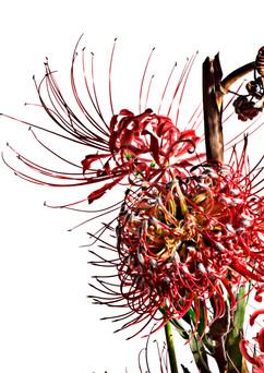 flower_214.jpg