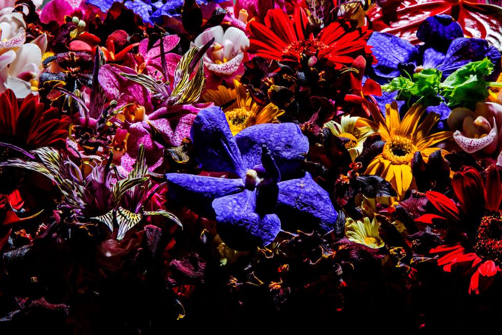 flower_156.jpg