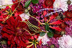 flower_251.jpg