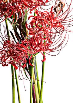 flower_216.jpg