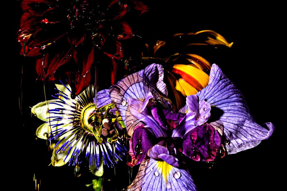 flower_194.jpg