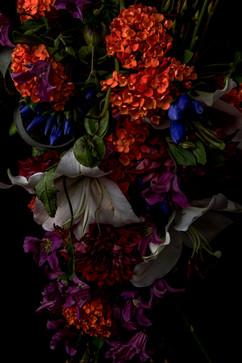 flower_231.jpg