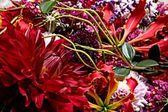 flower_252.jpg