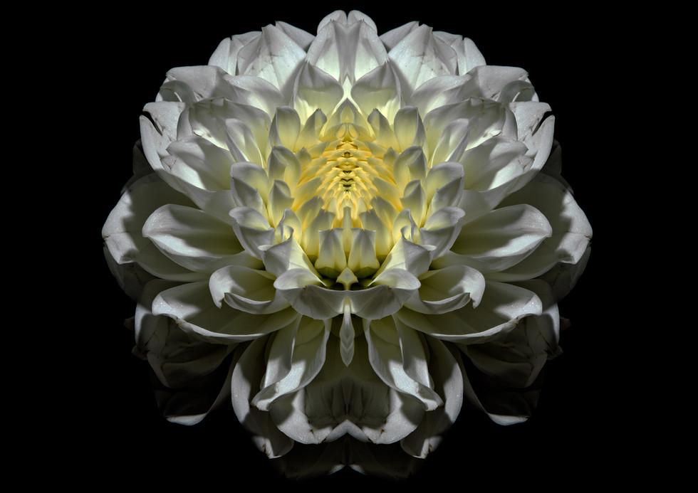 flower_220.jpg