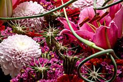 flower_249.jpg