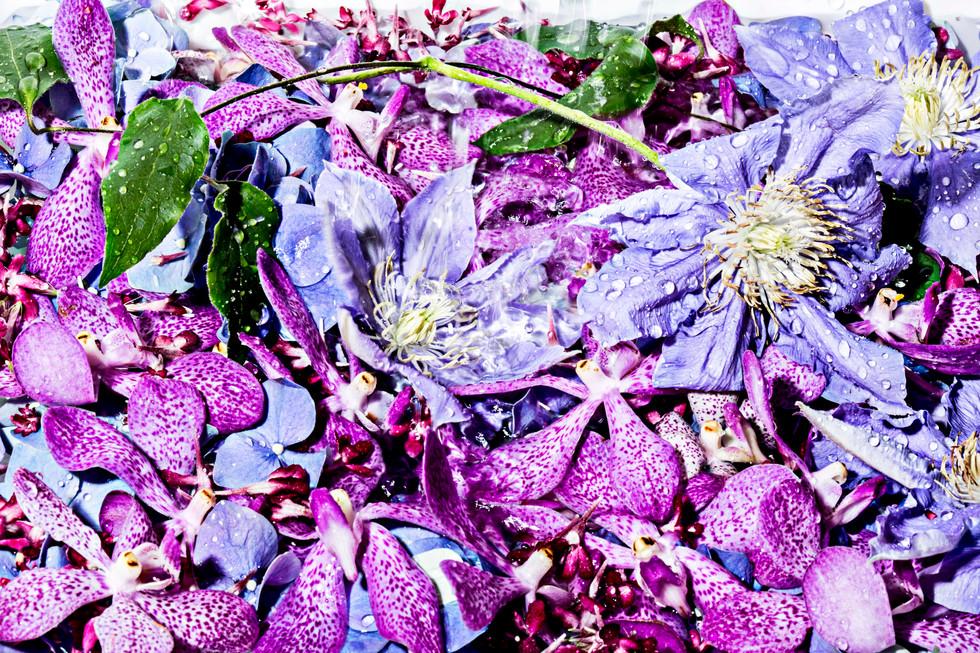 flower_079.jpg