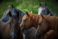 Horses Photo Credit Tracy Hintz