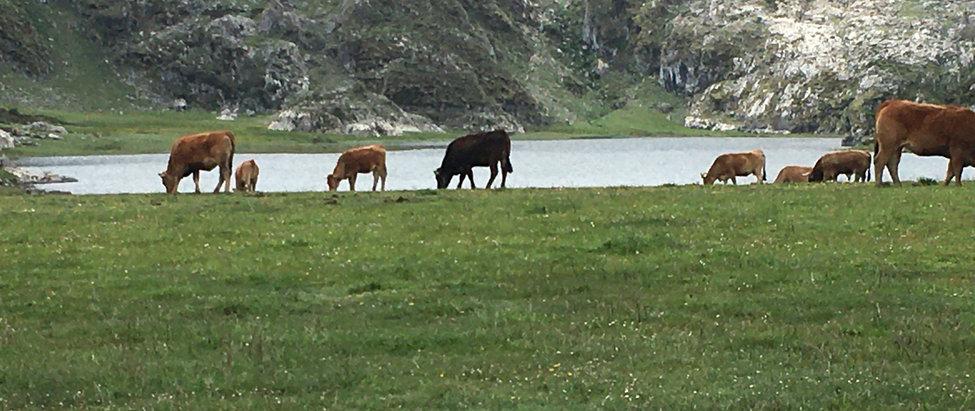 Martes 1 > Lagos de Covadonga + Curso Básico de Orientación